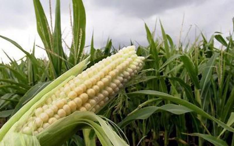Des produits OGM étiquetés par 64 pays, les États-Unis esquivent