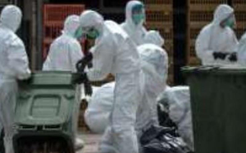 Mesures d'urgence de l'UE après des cas de grippe aviaire