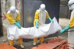 Rapport de l'OMS: Ebola a causé plus de 10.000 décès