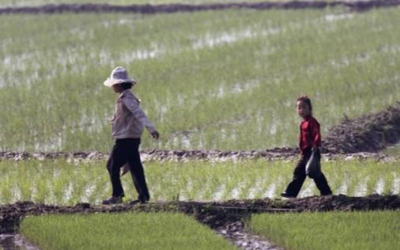L'Onu redoute de graves pénuries alimentaires en Corée du Nord