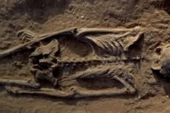 """Kenya : un """"massacre de masse"""", il y a 10.000 ans déjà"""
