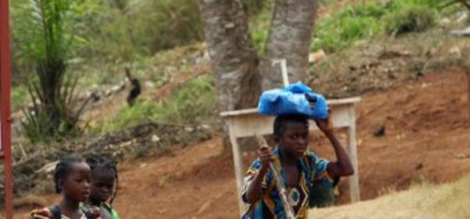 Côte d'Ivoire : Près de 800 000 enfants travaillent dans les plantations